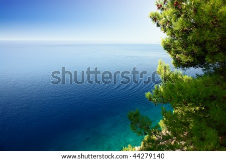 Close up of the coniferous tree above the beautiful sea. - stock photo