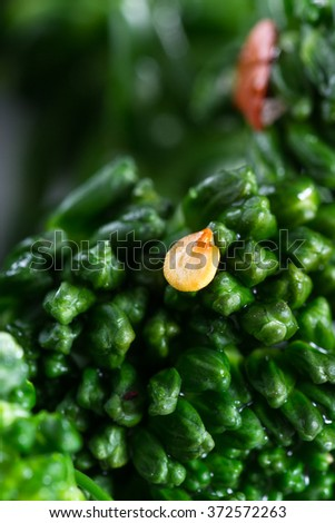 close up of the detail in each fleet in this organic broccolini with colorful seasonings - stock photo