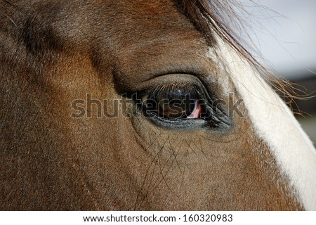 Close up of the eye of a young horse - stock photo