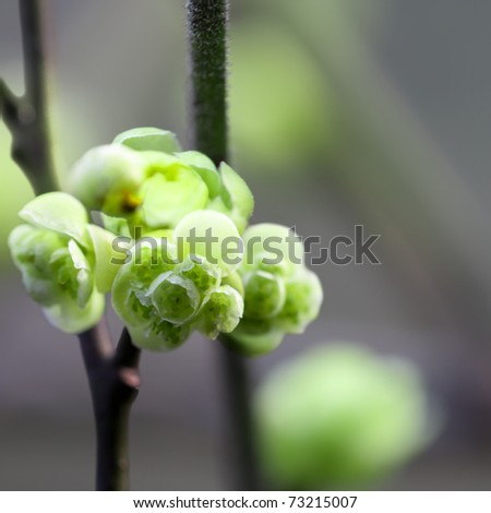 close up of the green flower in early spring - stock photo