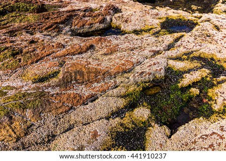 Close up of the rocky coral shore tide pools at Acadia National Park, Maine - stock photo