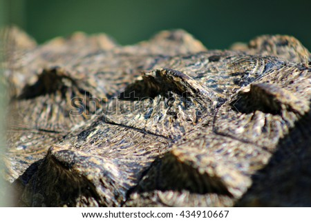 Close up of the scales of a crocodile's back. Crocodile skin. Shallow depth of field. - stock photo