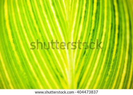 Close up of the striped yellow-light-green leaf in the sunshine. - stock photo