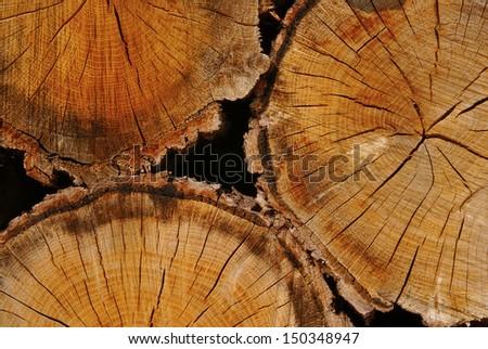 Close up of three wood logs - stock photo