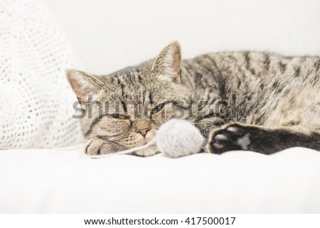 Close up of tired tabby cat lying down and resting at home. Sleeping pet taking a nap. - stock photo