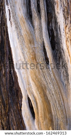 Close Up of Tree Bark in Forest - stock photo