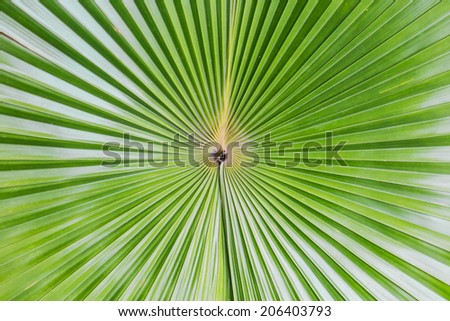Close up of Tropical Green Leave Texture use as a Background. - stock photo