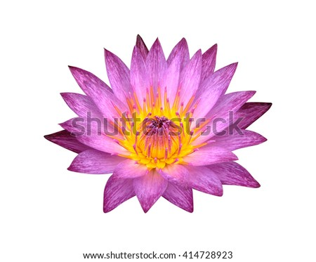 Close up of violet lotus isolated on white background, Clipping path included. - stock photo