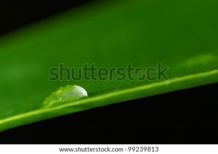 Close-up of water drop on green leaf against black background. - stock photo