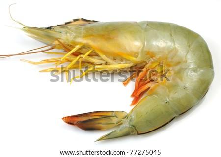 Close-up of White Shrimp isolated on white. - stock photo