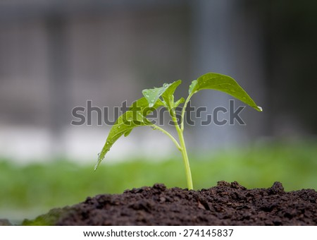 Close up of young plant growing from fertile soil - stock photo