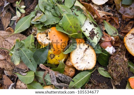 Close Up of Zest on a Compost Heap - stock photo