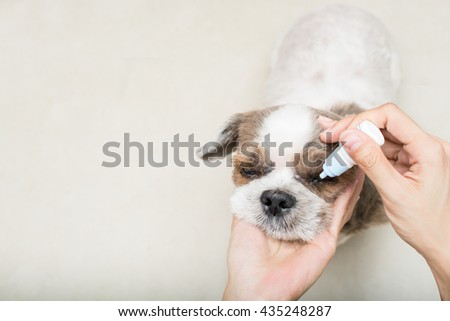 Close up old dog with women hand vet treats eye,with space - stock photo