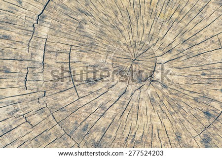 Close - up old tree stump texture and background - stock photo