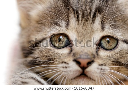 close up on a kittens face portrait - stock photo