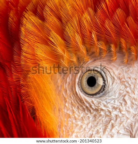 Close-up on a Scarlet Macaw's eye (4 years old) isolated on white - stock photo