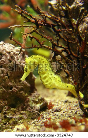 Close up on a sea horse - stock photo
