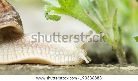 Close up on a snail in the garden - stock photo