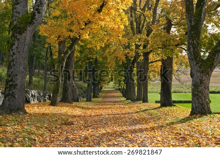 Close up on autumn leaves on a parkways ground. Chestnut trunks in an alley in the background. Farmland straight ahead. - stock photo