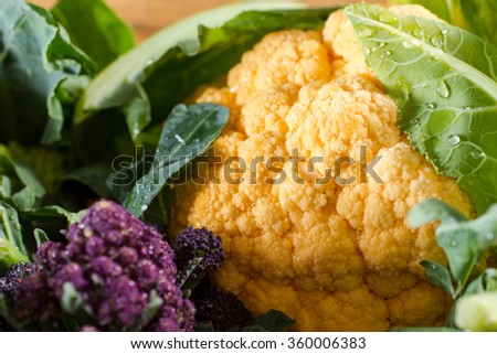 Close up on beautfiul yellow cauliflower, fresh and dewy from the vegetable garden. - stock photo