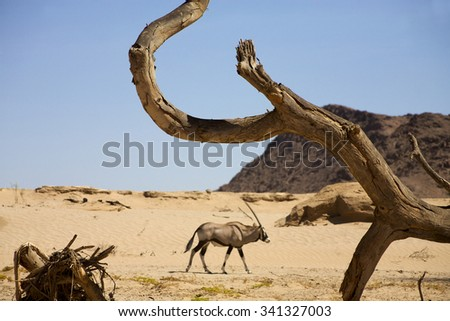 Close up on dead tree with a gemsbok walking in the desert in the background near Puros, Conservation area in Kaokoland. Namibia (Selective focus) - stock photo