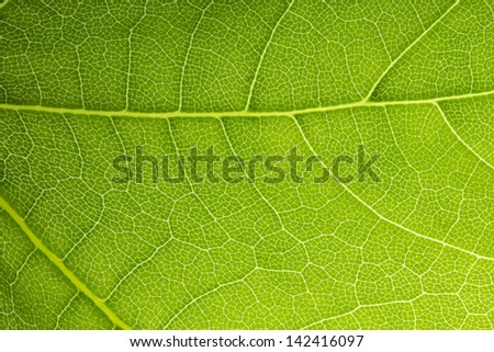 Close up on green leaf texture - stock photo