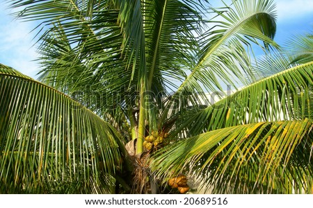 Close-up on green palm fronds in tropical garden - stock photo