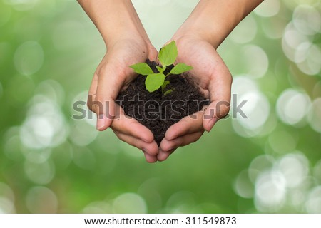 close up on human hand gesture hold a little growing plant on blurred green nature background:Safe the world energy concept:pure ecology system concept.save the planet concept.clean environment globe - stock photo