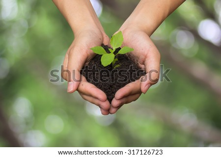 close up on human hands gesture holding a little growing plant over blurred green nature backgrounds : Safe the world concept,ecology system concept.safe the world concept.selective focused. - stock photo