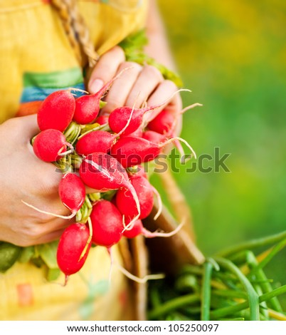 Close-up on ripe radish, woman gardener growing organic green vegetables, healthy eating concept, female holding food in hands, harvest season, farmer working in the field, shallow dof - stock photo