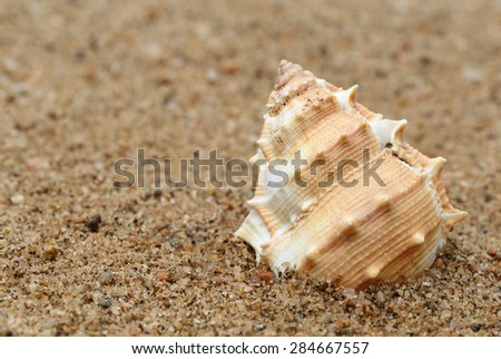 Close up on snail shell in a sea beach - stock photo
