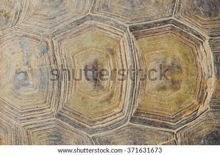 Close up on the carapace (top shell) of a desert tortoise, a federally endangered species.   - stock photo