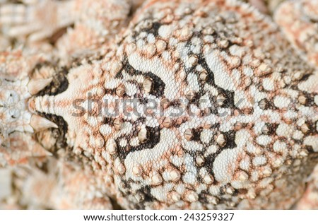Close up on the dorsal pattern of a desert horned (Phynosoma platyrhinos)  lizard in the mojave desert. - stock photo
