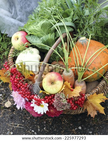 close up organic fruit and vegetable in basket - stock photo