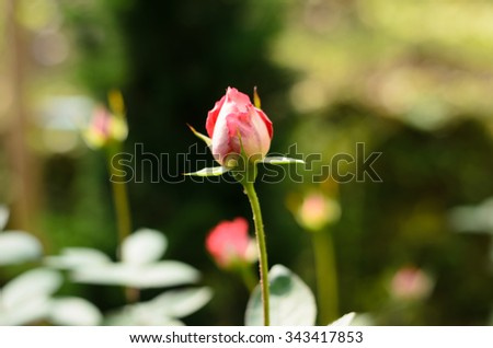 Close up  Perple flower on blurred background:Selective focus with shallow depth field. - stock photo