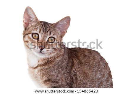 Close-up photo of a brown striped kitten isolated on white background. Studio shot. - stock photo