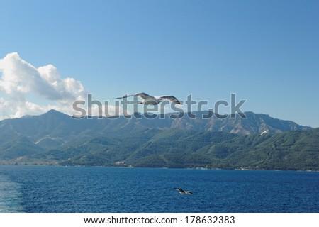 Close up photo of a seagull over the sea - stock photo
