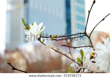 Close up photo of cherry blossom tree with skyscraper on background - stock photo