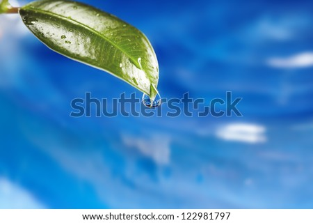 Close-up photo of the wet leaf with water drop on a blue liquid background. Natural colors. Shallow depth of field added by macro lens for natural view - stock photo