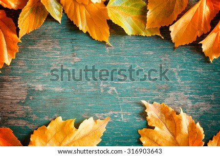 Close up photograph of a colorful fall backdrop - stock photo
