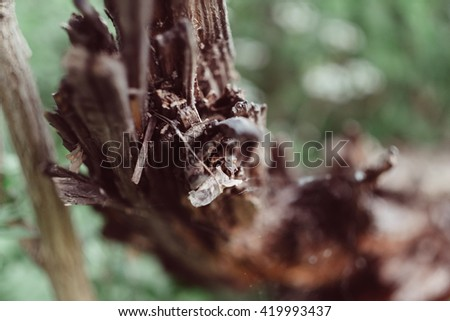 Close-up picture of a tree log, texture. Closeup macro image of wood bark on green background. - stock photo