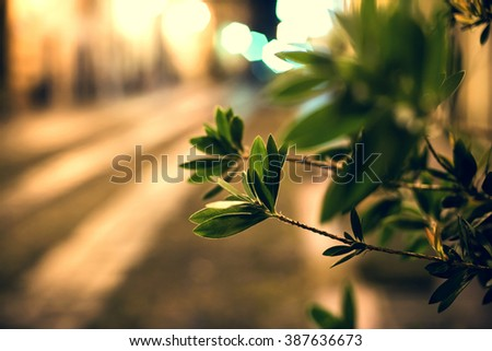 Close up picture of leaves in old town - stock photo