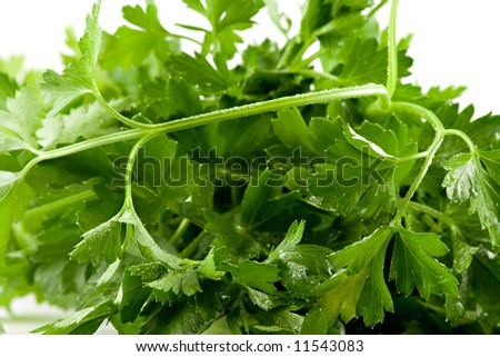 Close up picture of some fresh green parsley - stock photo
