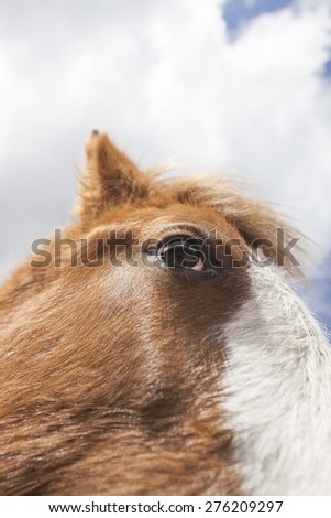 Close-up picture of the eye if a horse. - stock photo