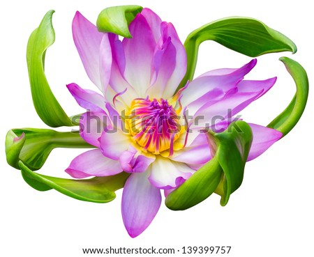 Close up pink color blooming water lily or lotus flower isolated on white - with path  - stock photo
