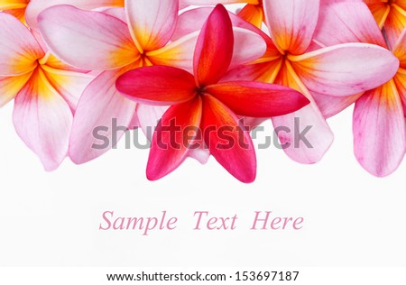 Close up plumeria flowers on white background with sample text - stock photo