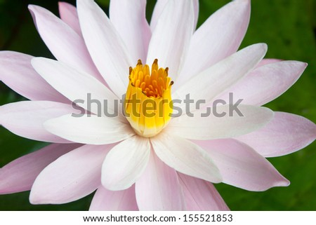 close up pollen and leaf flower - stock photo
