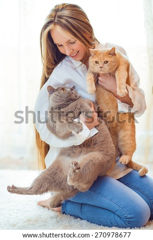 close-up portrait of a beautiful girl holding british and scotish cats - stock photo