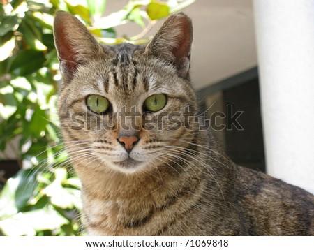 Close-up portrait of a cat - stock photo