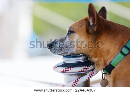 Close up portrait of a dog outdoors - stock photo